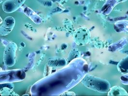 Diversity In the World Of Bacteria